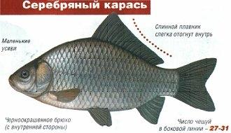 на что клюет рыба карась