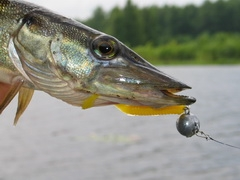 клюет ли сейчас рыба