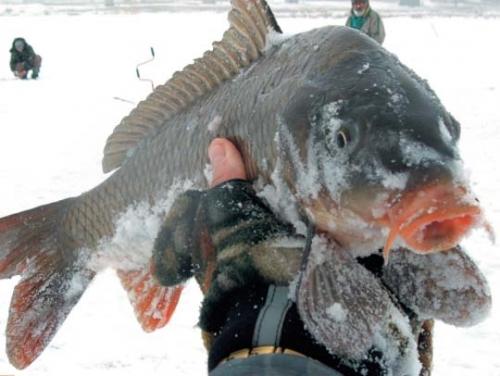 какая рыба клюет в начале