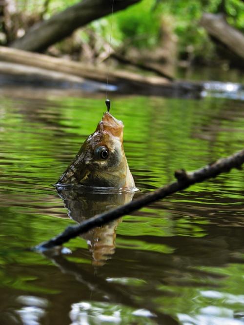 клюёт ли рыба в мае и какая