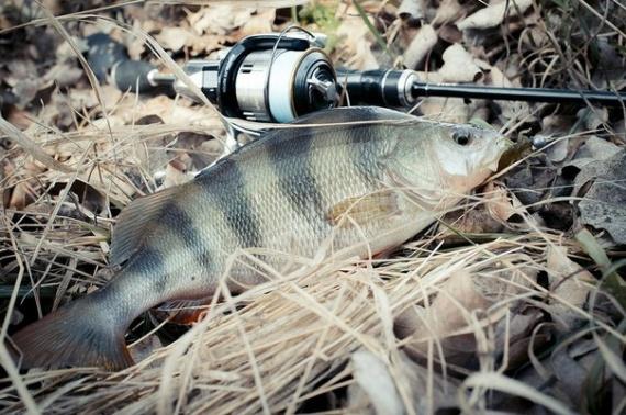 способы рыбалки окуня
