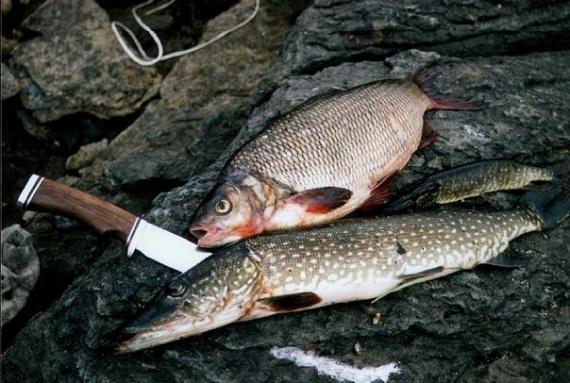 какая рыба клюет на опарыша