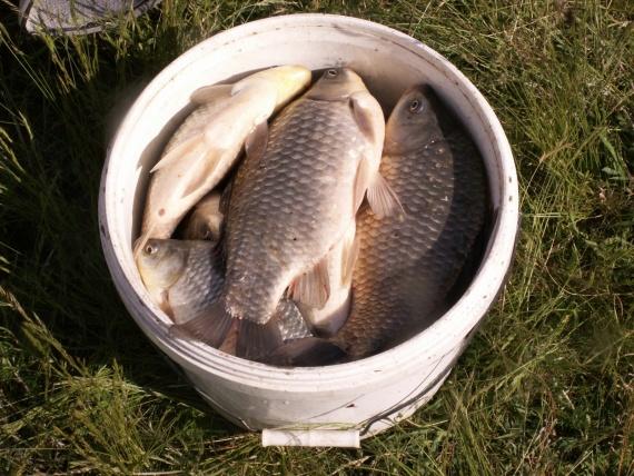 какая рыба клюет в сентябре на камеру