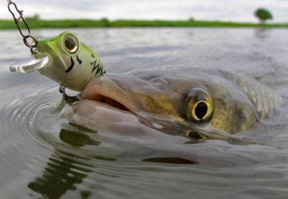 какая рыба клюет в сентябре в дождь