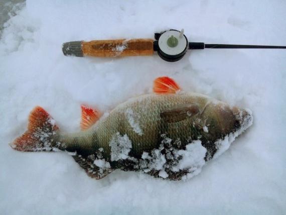на каких водоемах клюет рыба