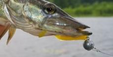 Рыбинское водохранилище продолжает стремительно опустошаться