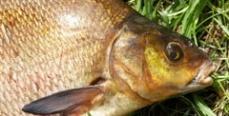 В Липецкой области инвалиды-колясочники соревновались в рыбной ловле