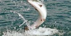 Рыбалка в Мурманске: за что платить?