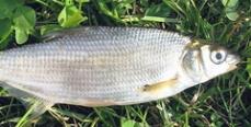 """Участники """"Осеннего рыбца 2011"""" поймали 15 килограммов рыбы"""