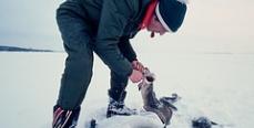 Нижегородская область предлагает запретить зимой ловить налима