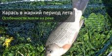Карась в жаркий период лета: Особенности ловли на реке