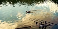 Где искать сазана на малых реках