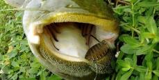 Секреты успешной рыбалки. Ловля сома