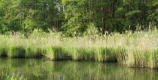 Моя река Здвиж Киевская область