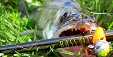 Одиннадцать самых распространённых ошибок при ловле судака на мелководье