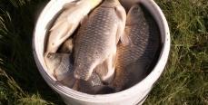Жор рыбы. Какая рыба в какие месяцы